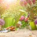 This guide will give you all the tools and tips you need to garden, no matter what your space limitations.
