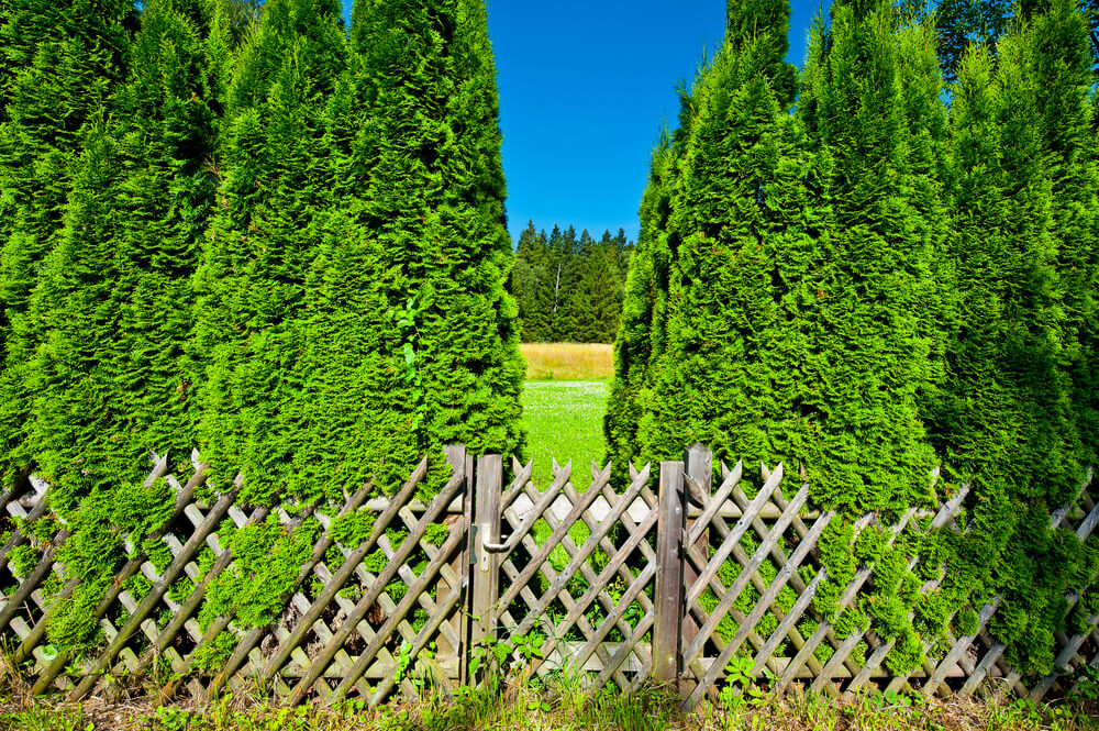 On old rustic lattice fence and gate provides a simple way to establish a perimeter.