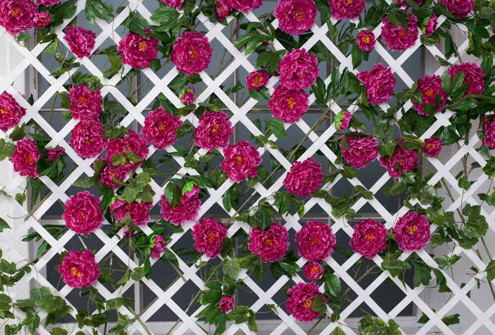 White lattice fence panels with pink flowers growing though to create a beautiful and dreamy wall.