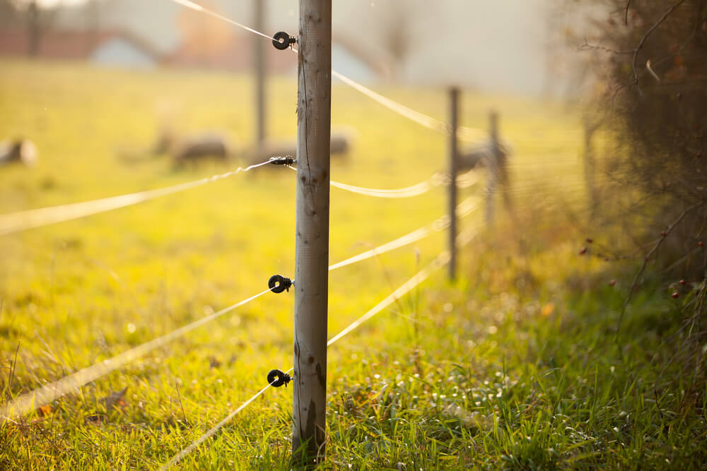 fence posts are laid out with the electric fence wire attached to the posts the