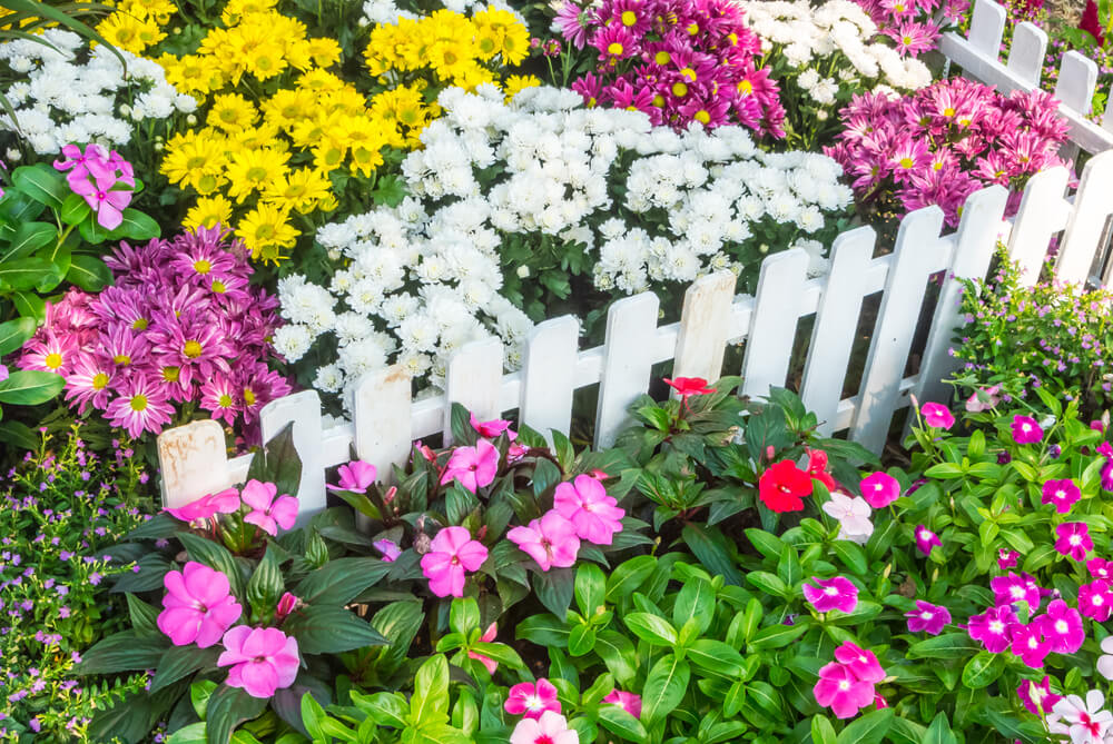 Simple but pretty bright white garden fence. These short planks done all the same height all around these flowers add a nice visual appeal to this garden.