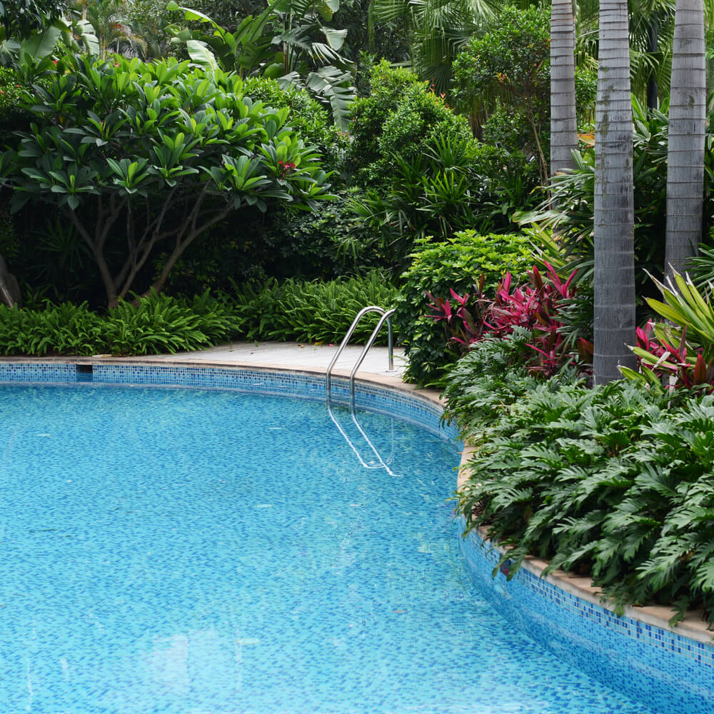 Swimming Pool Plants: Swimming Pool Designs (IN GROUND POOL IDEAS
